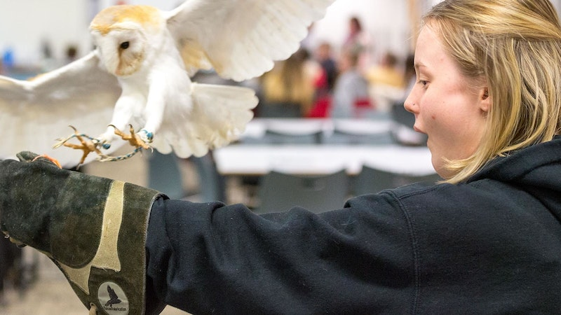 A female student holding out her gloved arm with an owl landing on it in a classroom